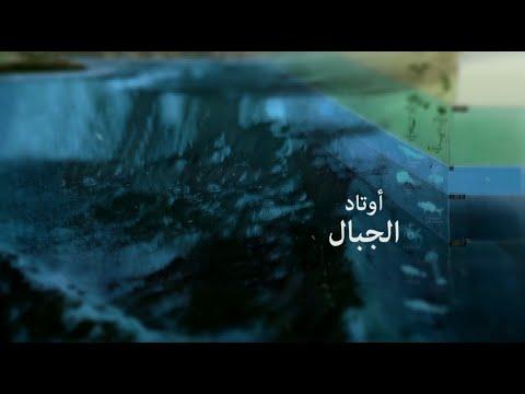 عقيد بريطاني أسلمته مظاهرة! | ثلاث آيات غيرت حياتي | 4