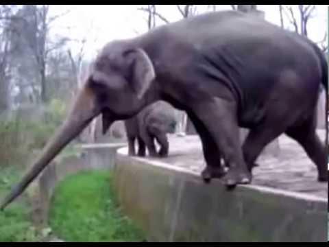 Status engraçados - Whatsapp funny video Funny Elephant@whatsapp