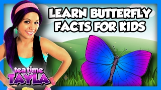 Learn about a caterpillar's change, Butterfly for Children