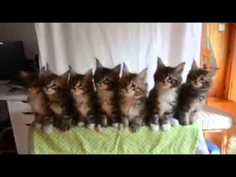 gattini fratellini sincronizzati