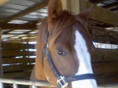 Pensacola Riding Center