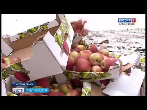Еда даром. Модное движение - Фудшеринг уже в Архангельске