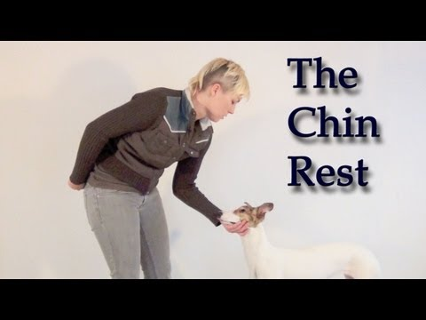 Teaching a Calm Chin Rest &#8211; clicker dog training