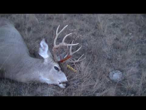 Montana Mule Deer Rut Hunt 2013