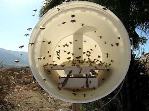 Honey Bee Dry Pollen Substitute