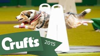 Day 2 Live | Crufts 2015