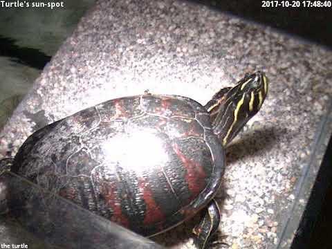 2017-10-20 turtles sun-spot_Nap videók