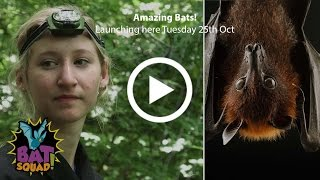 Bat Squad - Ep.1 - Amazing Bats