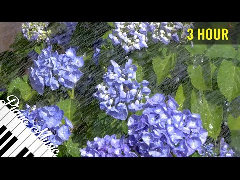 Video Amazing Piano Music #57 - Flowers in the Summer Garden - 3 Hour Instrumental Piano for Relaxation download in MP3, 3GP, MP4, WEBM, AVI, FLV January 2017