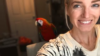 Video Bringing Home a New Bird | What Day One With a New Bird Looks Like!!! MP3, 3GP, MP4, WEBM, AVI, FLV Juli 2019