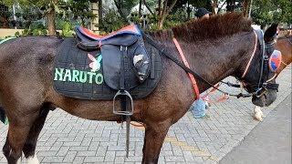Video Naik Kuda Poni   Riding A Horse MP3, 3GP, MP4, WEBM, AVI, FLV Mei 2019