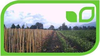 WunderVideo: Wie es wächst