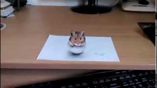 Download Lagu 3D Hamster drawing Mp3
