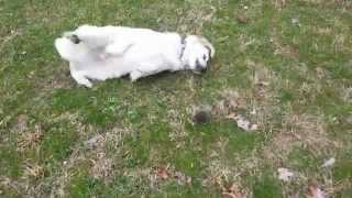 Dog Found A Mole And Want To Play
