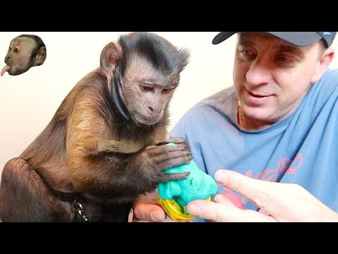 MONKEY LOVES PLAY DOH!