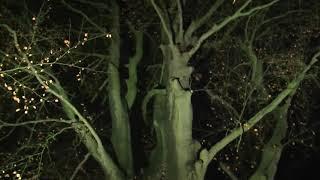 Lichtshow Soestdijk