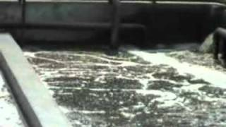 Industrial Waste Water.- types of tannery wastes