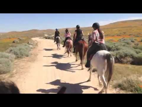Trail Riding  for Experienced Horse Riders in California