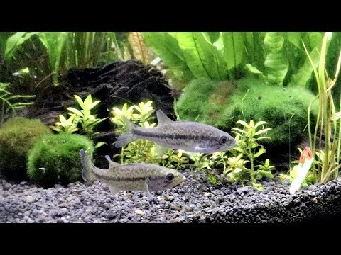 Video Pet Bass ATTACK Micro Fishing Lures!! download in MP3, 3GP, MP4, WEBM, AVI, FLV January 2017