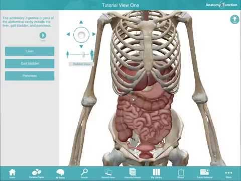 Anatomy & Function tutorial (PC/Mac)