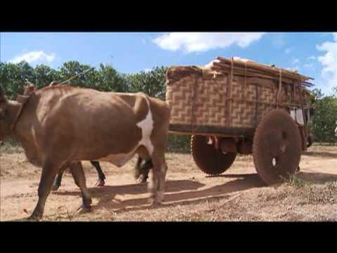 DVD ROMARIA 2012 (CARROS DE BOI)