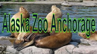 Anchorage (AK) United States  City pictures : Animals in Alaska Zoo Anchorage, Alaska, United States