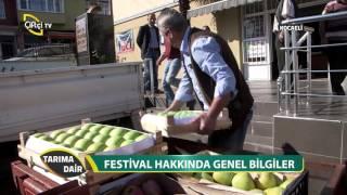 image of Tarıma Dair-Kocaeli Elma ve Armut Festivali