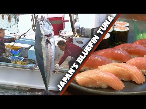 Bluefin Tuna (maguro) Story | Sea To Sushi Shop ★ Only In Japan