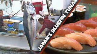 Video Bluefin Tuna (Maguro) Story | Sea to Sushi Shop ★ ONLY in JAPAN MP3, 3GP, MP4, WEBM, AVI, FLV Juli 2018