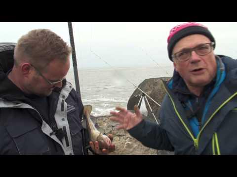 Visblad TV  - Op gul vissen tussen de blokken
