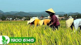 """Nông nghiệp   Nông nghiệp Việt Nam """"lột xác"""" sau 10 năm"""