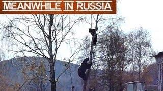 Video Bear Chases Man Up a Tree MP3, 3GP, MP4, WEBM, AVI, FLV Agustus 2017