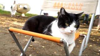 Nonton 撮影中の主演猫に密着! 映画『猫なんかよんでもこない。』撮影メイキング映像:オトナ編 Film Subtitle Indonesia Streaming Movie Download