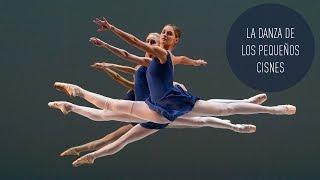 La danza de los pequeños cisnes - Documental de RT
