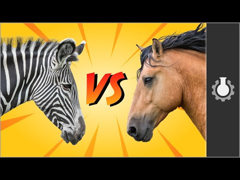 Americapox #2: Koně versus zebry - CGP Grey