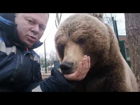 Медведь тарахтит