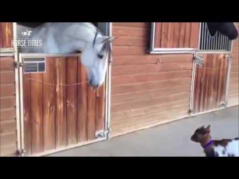 #ТаетЛед. Грибы и лошади. ТАЕТ ЛЕД