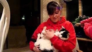 animale pisica cantareata