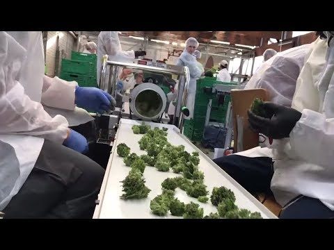 Cannabis im Sortiment: Lidl steigt in der Schweiz ins ...
