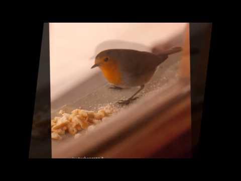 Guarda video