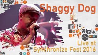 Video Shaggydog live at SynchronizeFest - 30 Oktober 2016 MP3, 3GP, MP4, WEBM, AVI, FLV Februari 2018