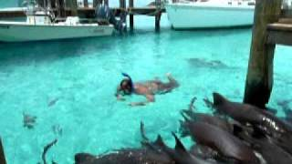Video Swimming with Sharks on Compass Cay, Bahamas... Another Lowe Family Adventure MP3, 3GP, MP4, WEBM, AVI, FLV Juni 2018