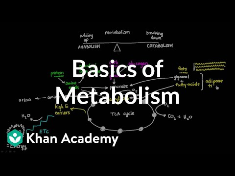 Stanford School of Medicine: Growth and Metabolism