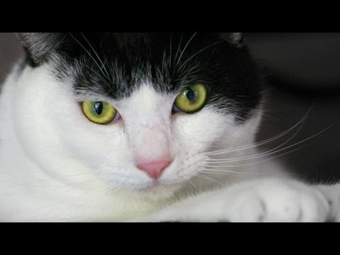 お座り猫ちゃん Cat sitting relaxed (видео)