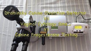 I´m documenting a female in heat from the beginning until after ovulation, I will be using a Draminsky Ovulation Detector a Microscope to do a Vaginal Cytology smear and final test will be done with the Canine P4 Analyzer Progesterone machine.To purchase one of my Canine P4 Analyzers please visite my web site at: http://www.canineprogesterone.com or call me (571) 263-8877 info@canineprogesterone.com http://www.facebook.com/mauiexpo http://www.englishbulldogbreeder.net