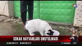Soğuk Hava Koşullarında Sokak Hayvanlarına Mama Dağıtımı - Star Tv