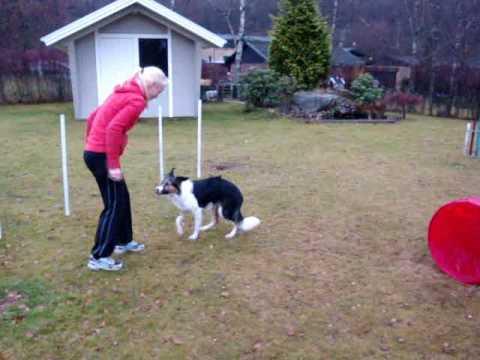 garden training 2