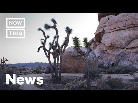 How the Government Shutdown Is Impacting Joshua Tree National Park | NowThis