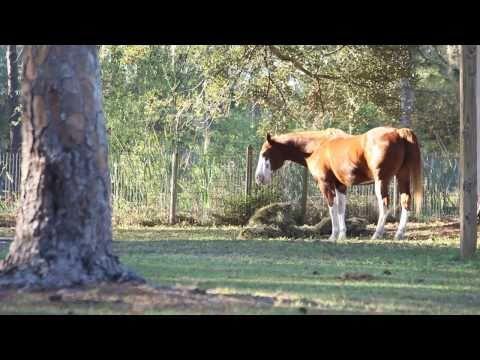 Special Equestrians of SW Florida