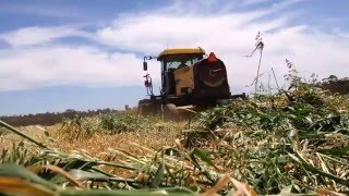 Hay Australia  city photo : CUTTING HAY IN WESTERN AUSTRALIA 2015